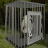 Spasi pandu
