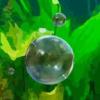 Balončići vode