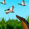Lov na patke